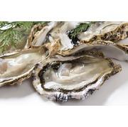 【福岡県糸島】 殻付き牡蠣(カキ) 3kg(39~45個)