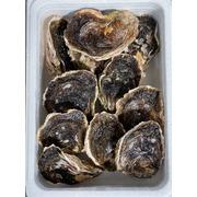 【福岡県糸島】 岩牡蠣 2㎏ (6~8個)